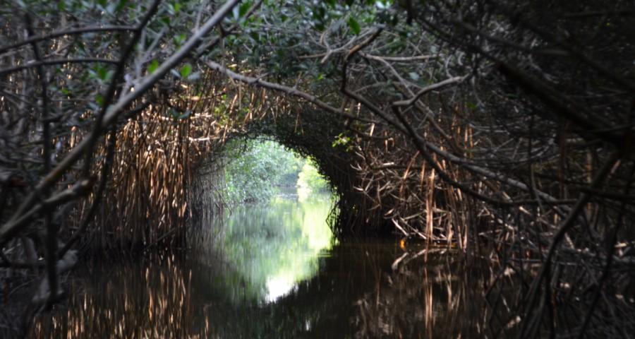 Estero Palo Verde I-aa97d12486